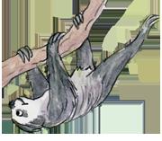 sloth small